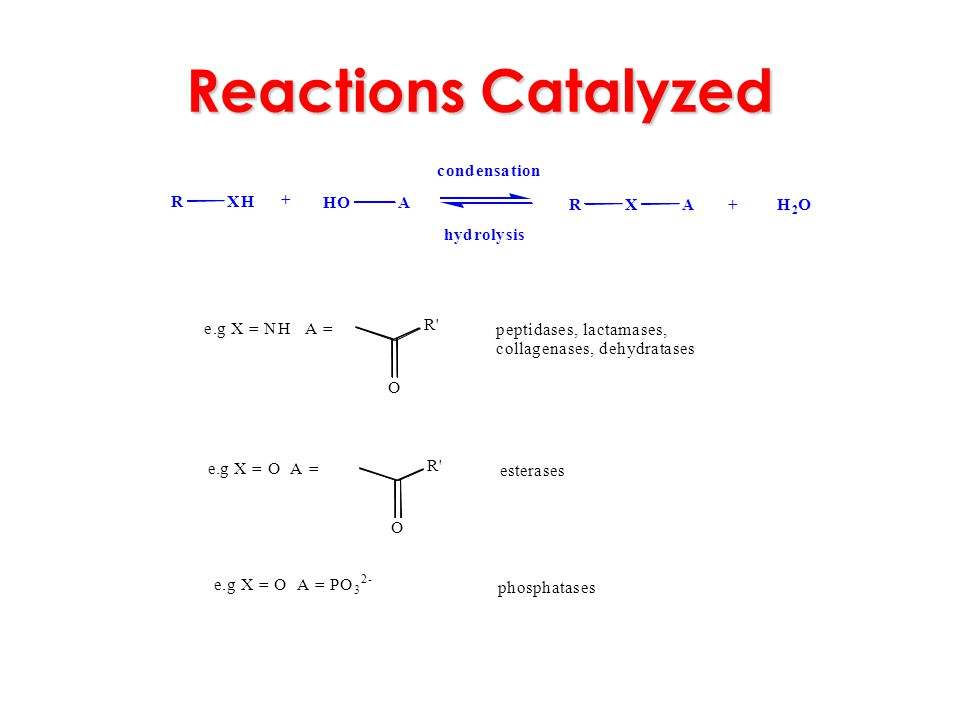 Reactions Catalyzed R X H O A + c o n d e s a t i h y r l . g = N p