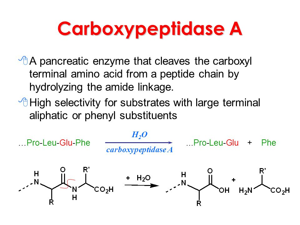 Carboxypeptidase A A pancreatic enzyme that cleaves the carboxyl terminal amino acid from a peptide chain by hydrolyzing the amide linkage.