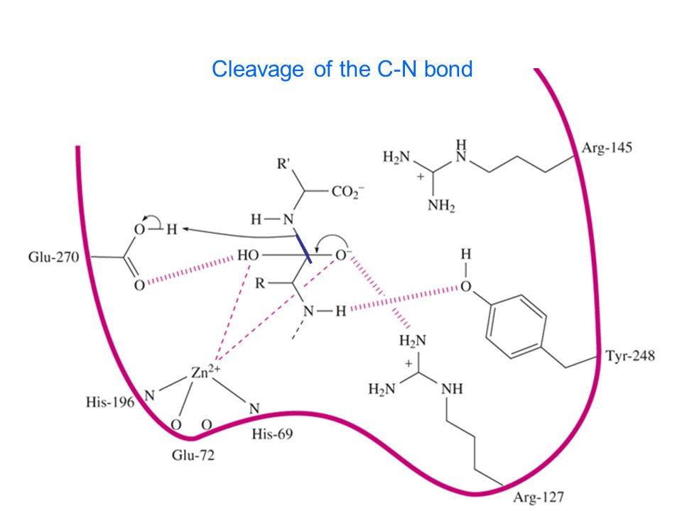 Cleavage of the C-N bond