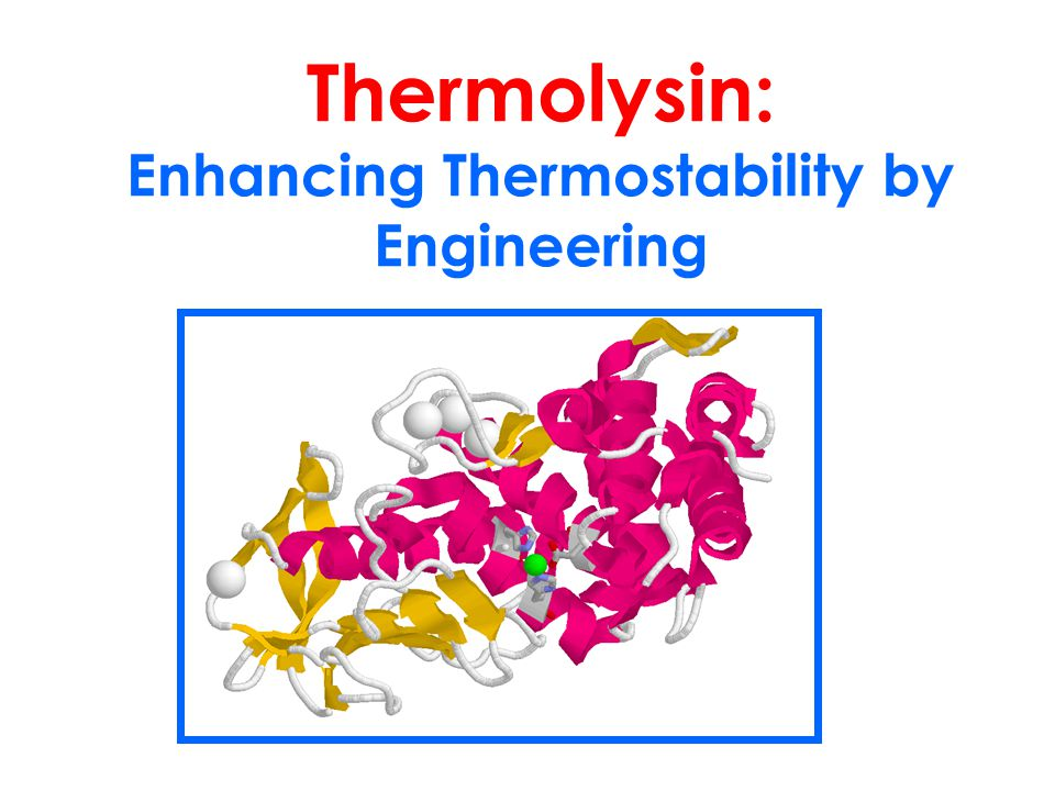 Thermolysin: Enhancing Thermostability by Engineering