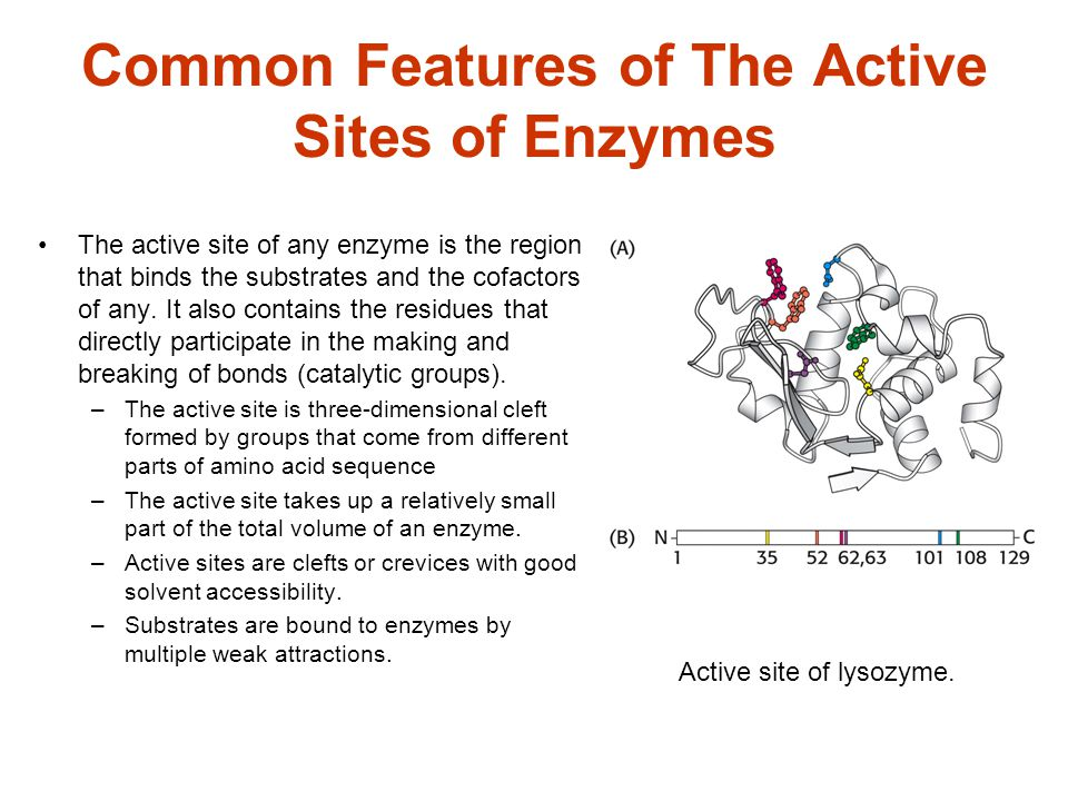 Common Features of The Active Sites of Enzymes
