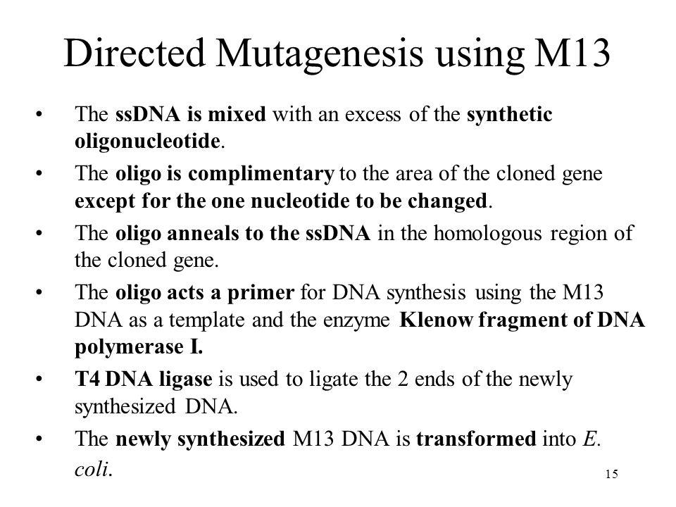Directed Mutagenesis using M13