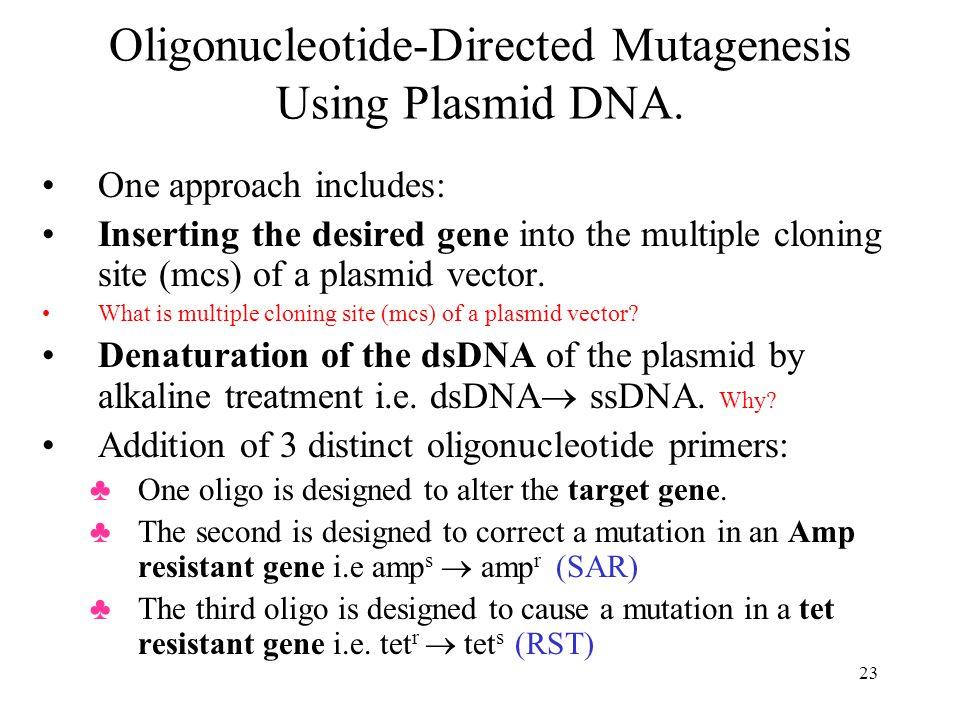 Oligonucleotide-Directed Mutagenesis Using Plasmid DNA.