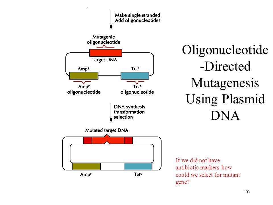 Oligonucleotide-Directed Mutagenesis Using Plasmid DNA