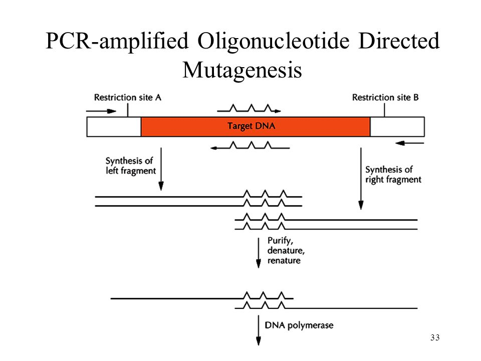 PCR-amplified Oligonucleotide Directed Mutagenesis