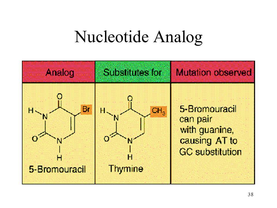 Nucleotide Analog