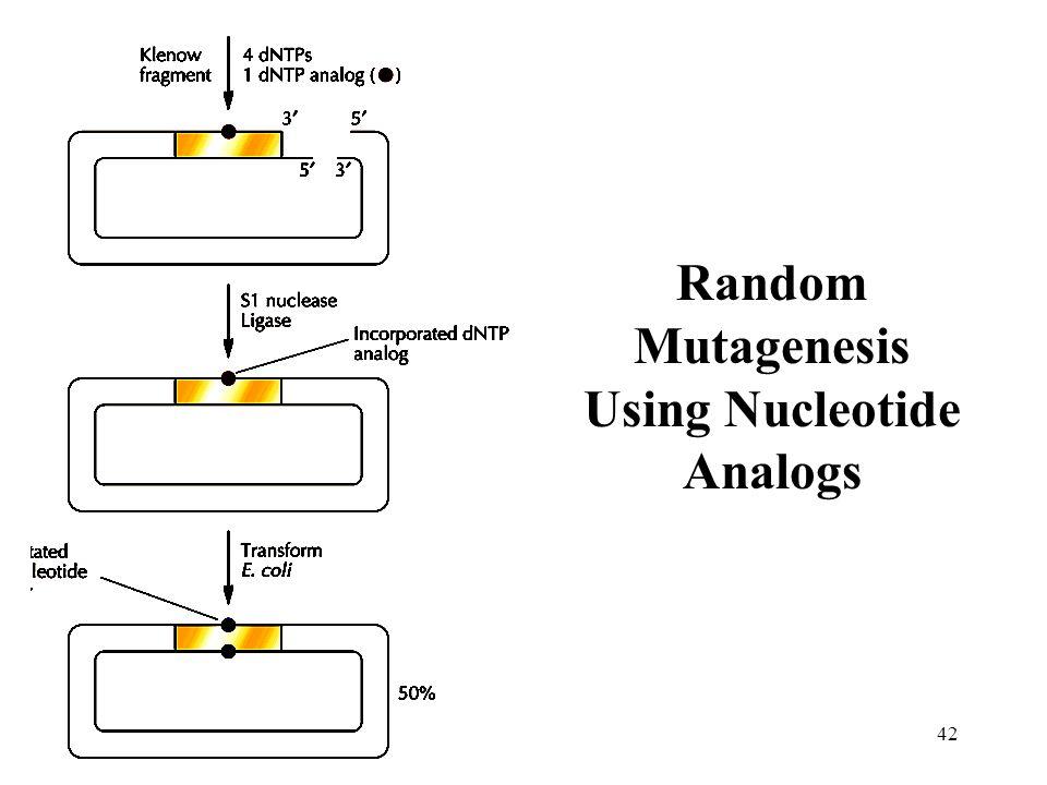 Random Mutagenesis Using Nucleotide Analogs