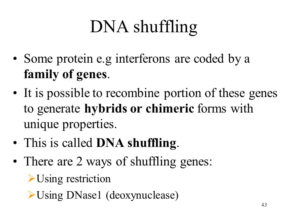 DNA shuffling Some protein e.g interferons are coded by a family of genes.