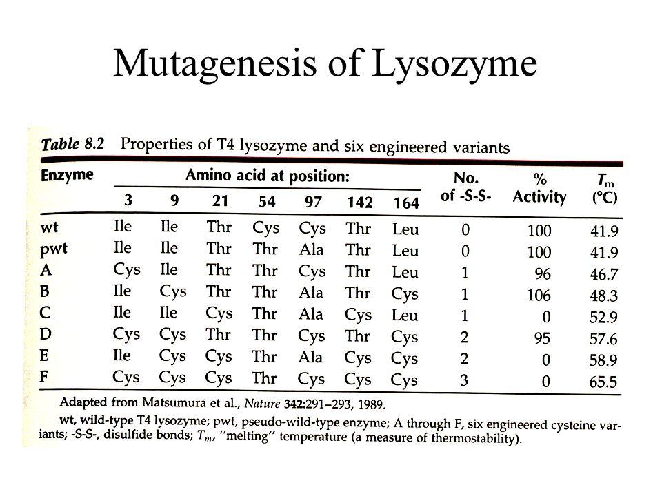Mutagenesis of Lysozyme