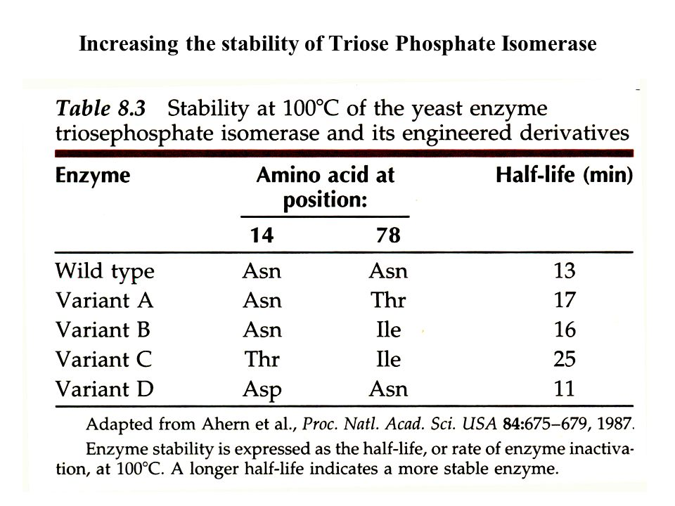 Increasing the stability of Triose Phosphate Isomerase
