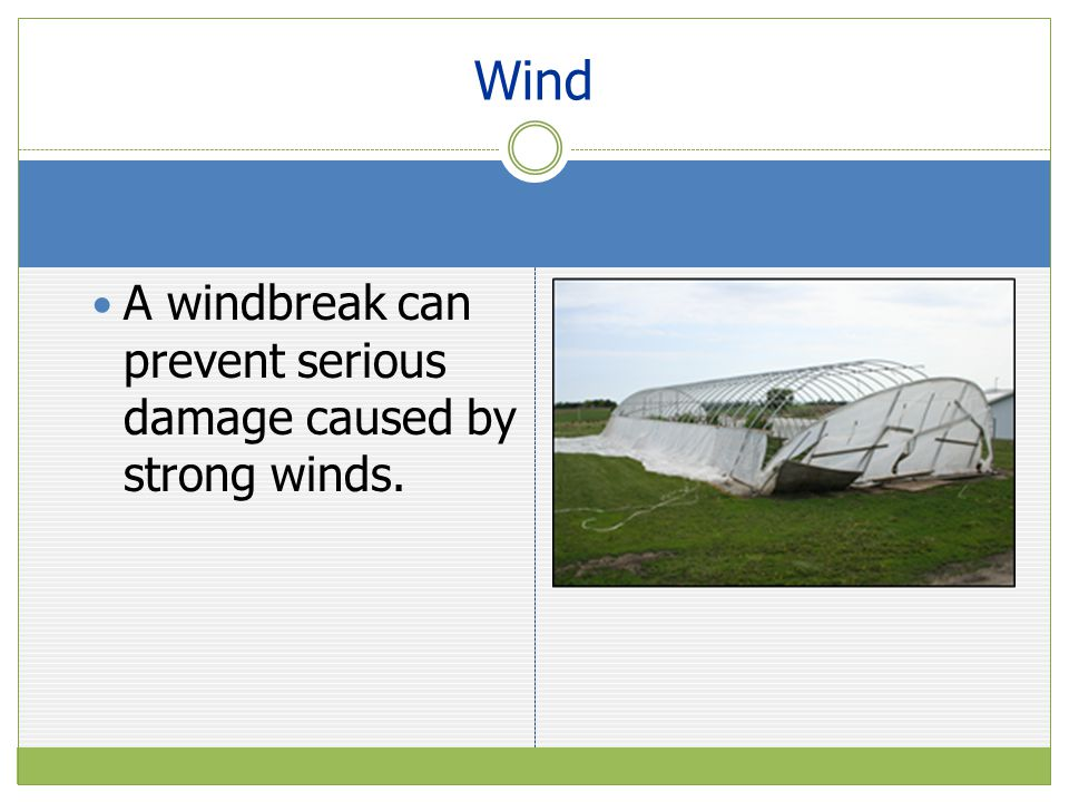 Wind A windbreak can prevent serious damage caused by strong winds.