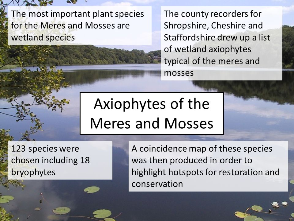 Axiophytes of the Meres and Mosses