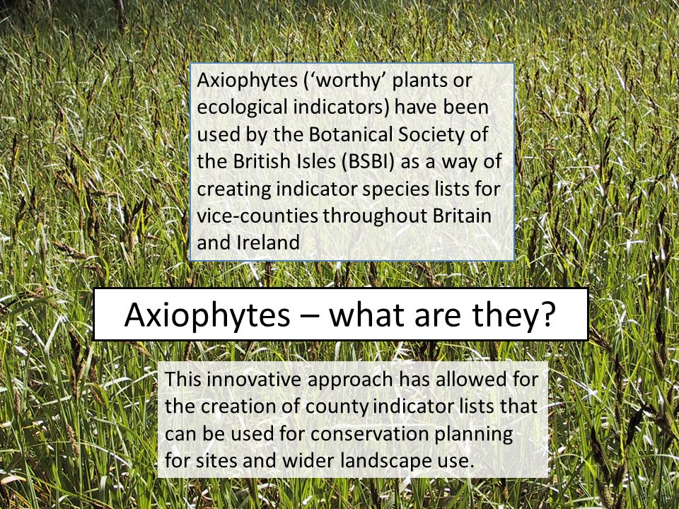 Axiophytes – what are they