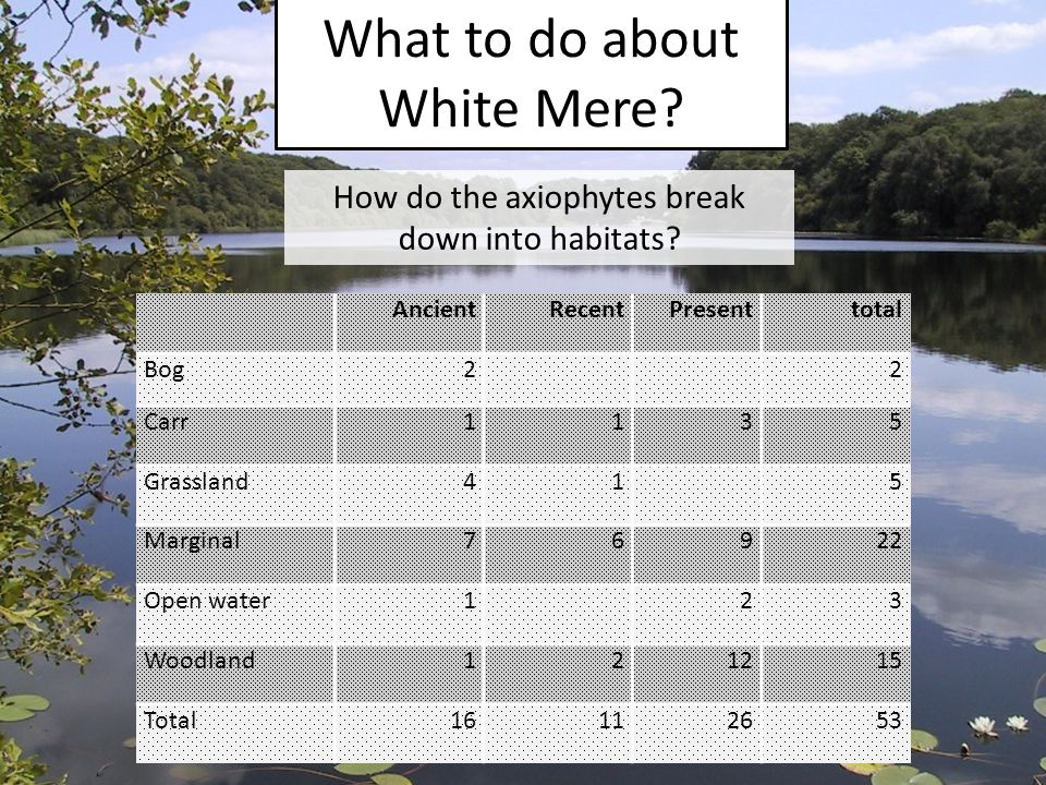 What to do about White Mere