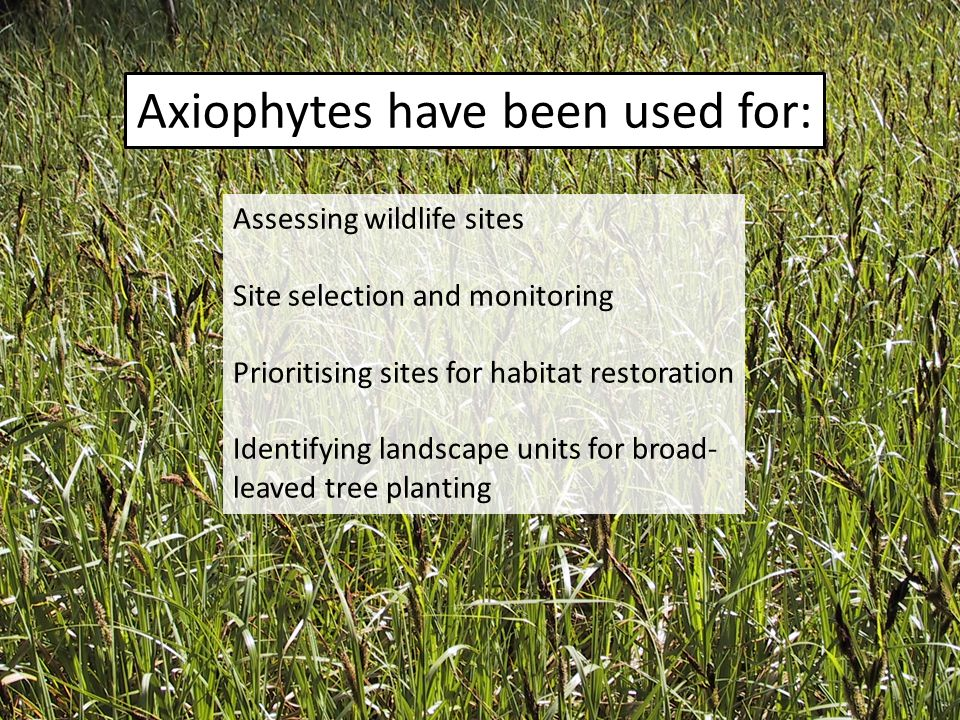 Axiophytes have been used for: