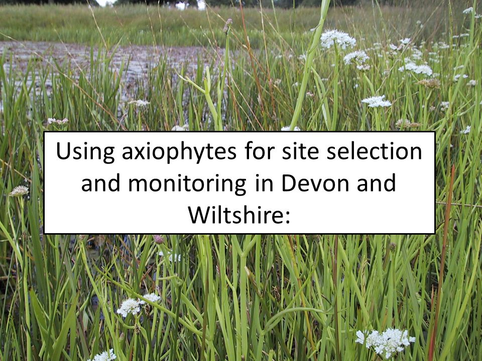 Using axiophytes for site selection and monitoring in Devon and Wiltshire: