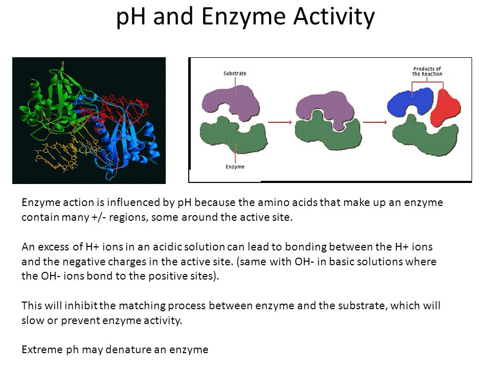 effect of temperature and ph on enzyme activity pdf