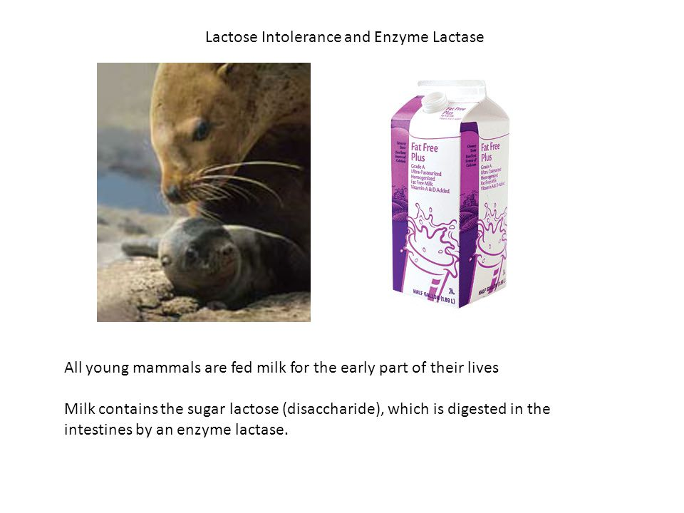 Lactose Intolerance and Enzyme Lactase