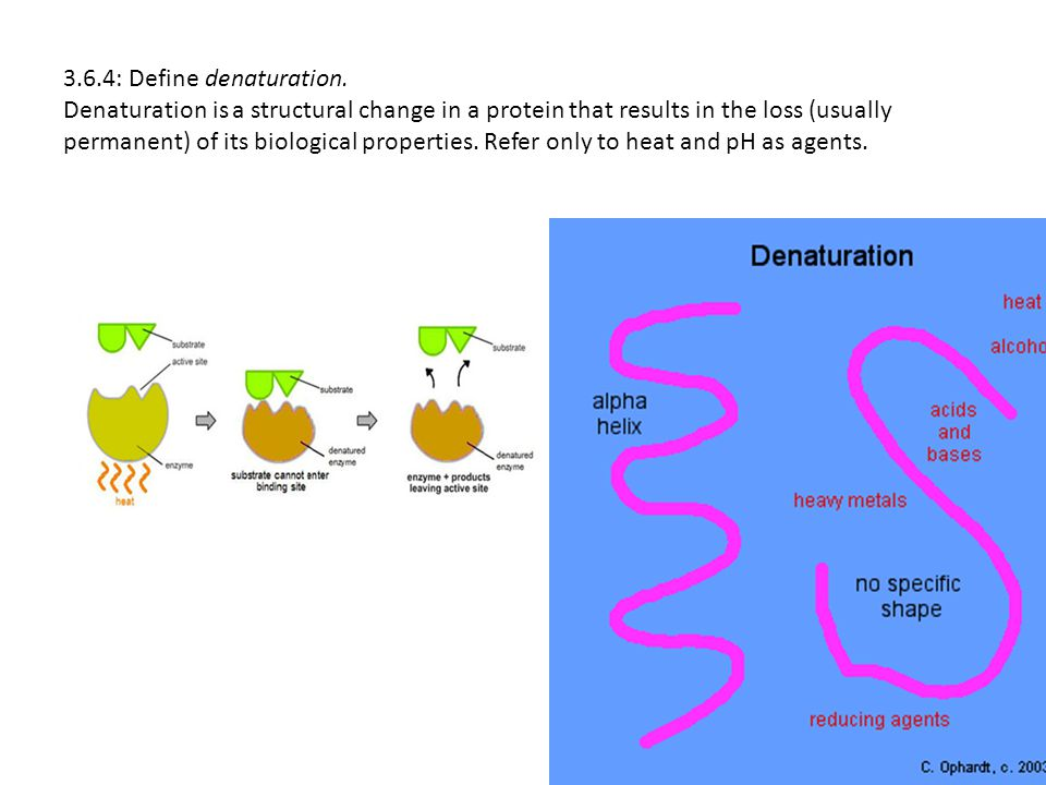 3.6.4: Define denaturation.