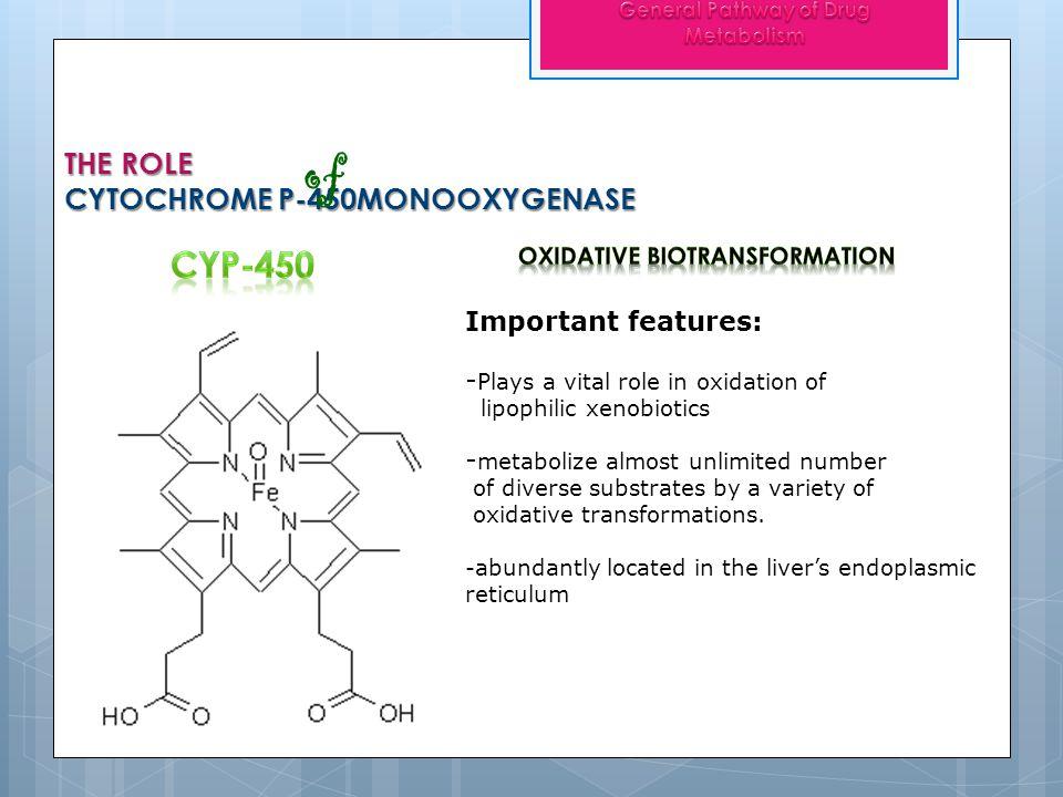THE ROLE CYTOCHROME P-450MONOOXYGENASE