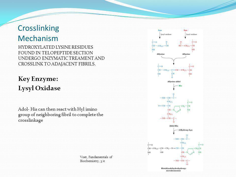 Crosslinking Mechanism