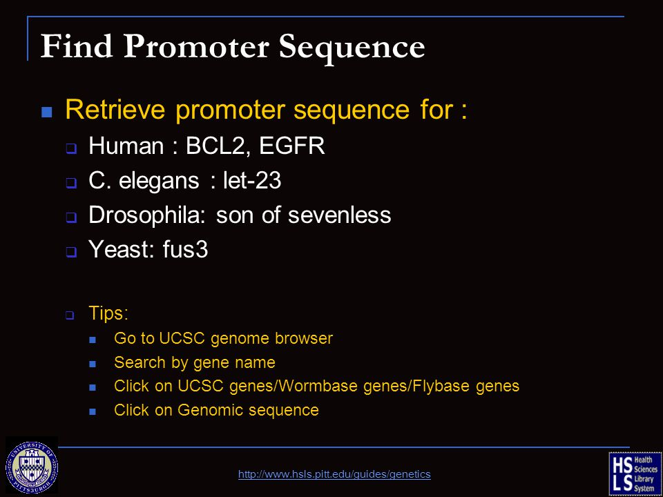 Find Promoter Sequence