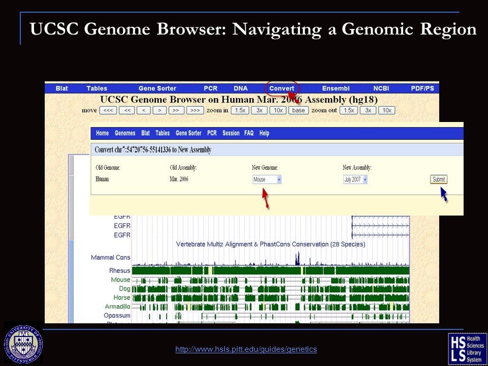 UCSC Genome Browser: Navigating a Genomic Region