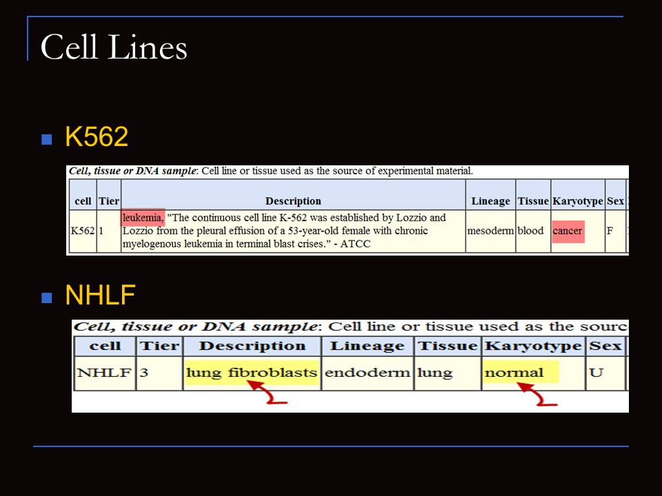 Cell Lines K562 NHLF