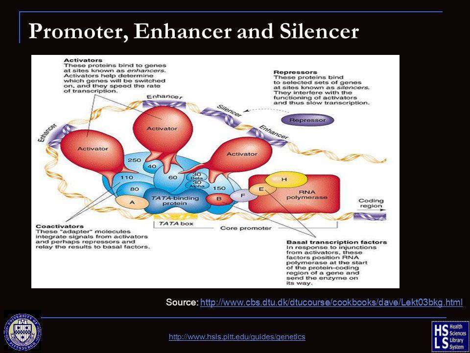 Promoter, Enhancer and Silencer