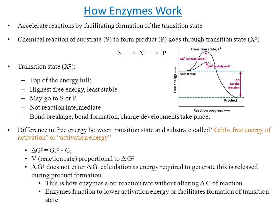 How Enzymes Work Accelerate reactions by facilitating formation of the transition state.