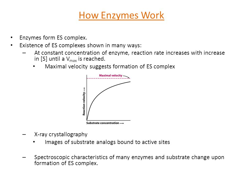 How Enzymes Work Enzymes form ES complex.