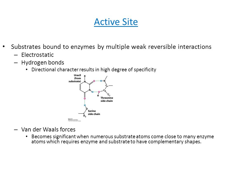 Active Site Substrates bound to enzymes by multiple weak reversible interactions. Electrostatic. Hydrogen bonds.