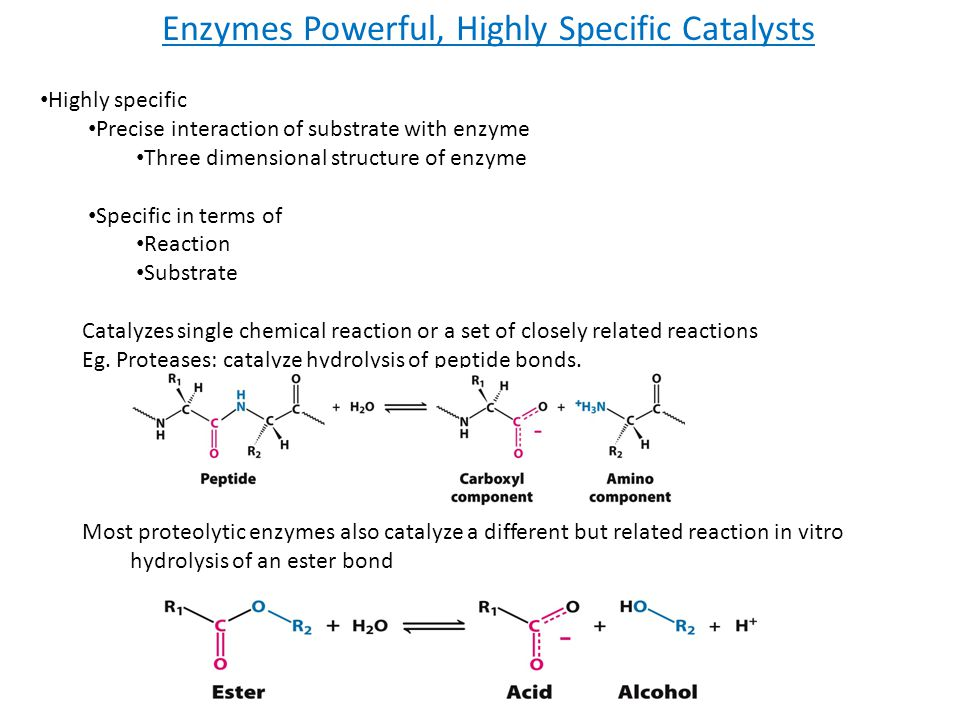 Enzymes Powerful, Highly Specific Catalysts