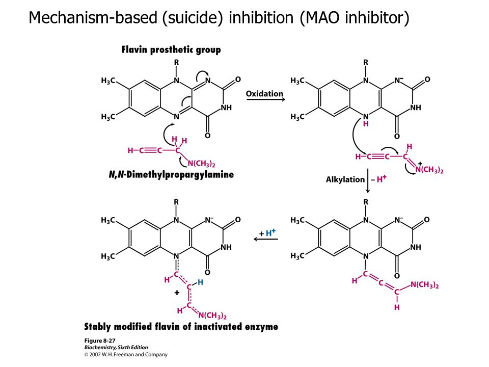 Mechanism-based (suicide) inhibition (MAO inhibitor)