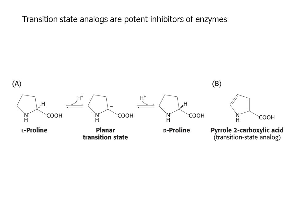 Transition state analogs are potent inhibitors of enzymes