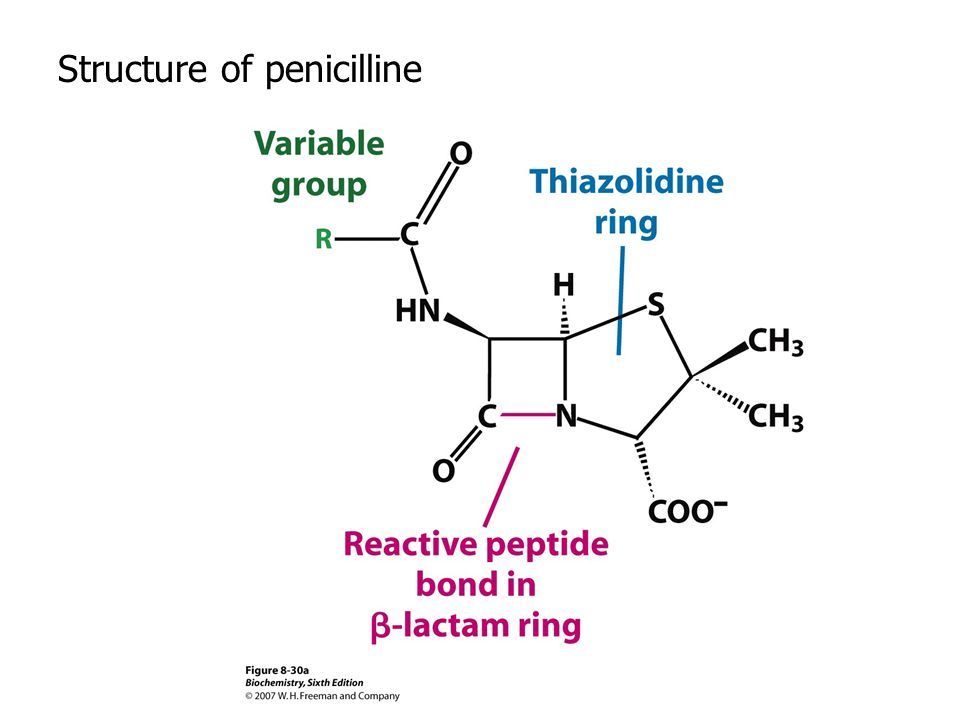 Structure of penicilline