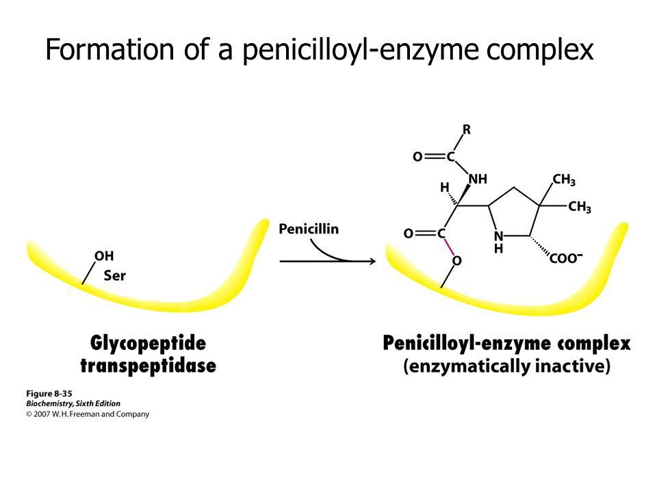 Formation of a penicilloyl-enzyme complex