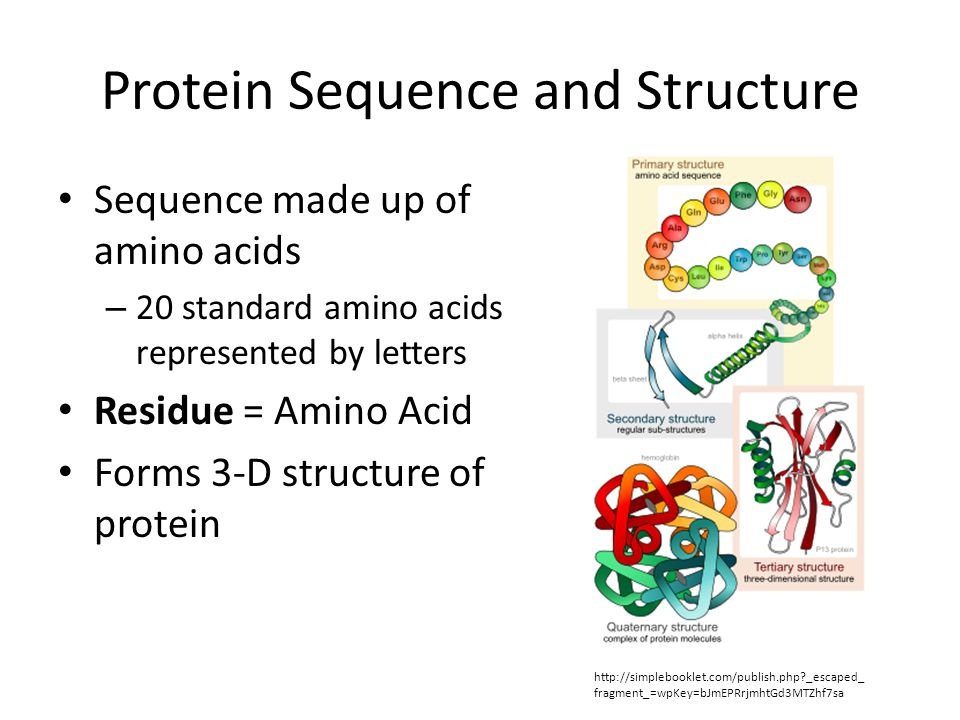 Protein Sequence and Structure