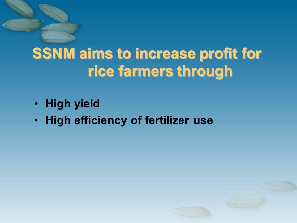 SSNM aims to increase profit for rice farmers through