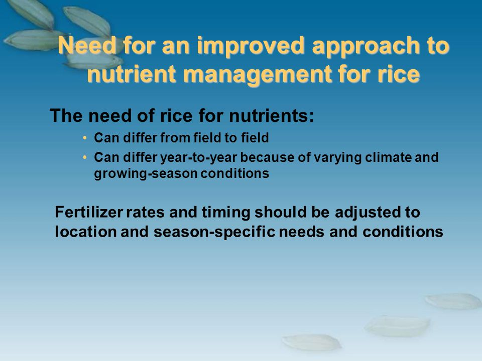 Need for an improved approach to nutrient management for rice