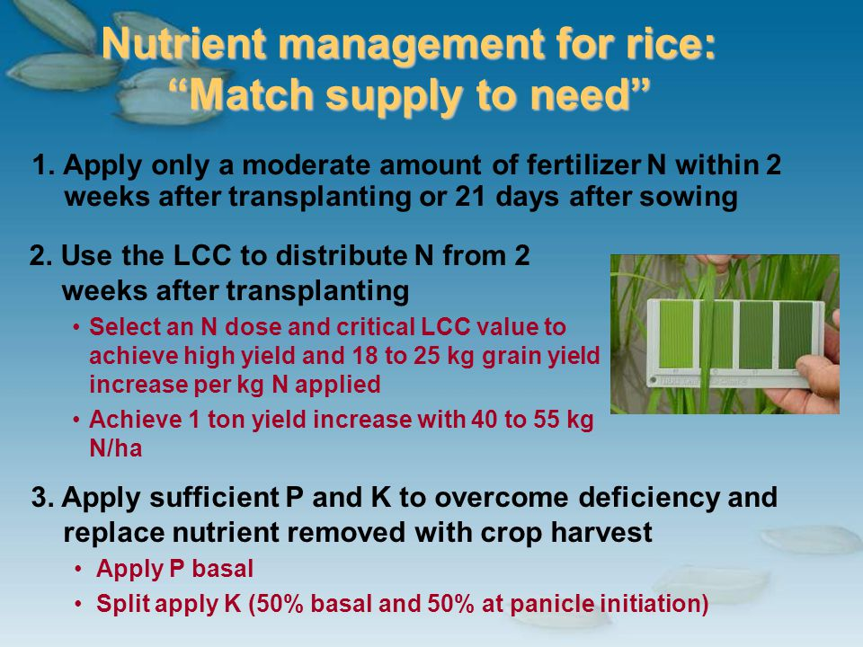 Nutrient management for rice: Match supply to need