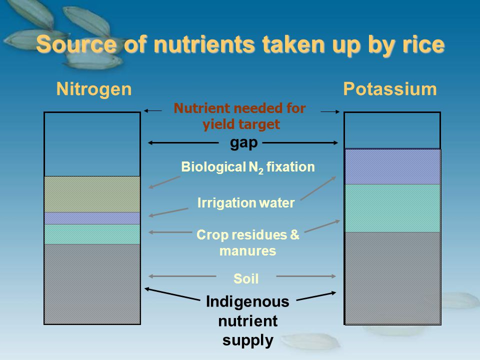 Source of nutrients taken up by rice