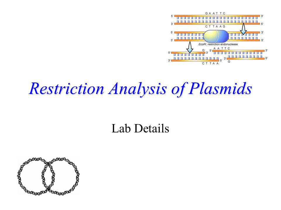 Restriction Analysis of Plasmids