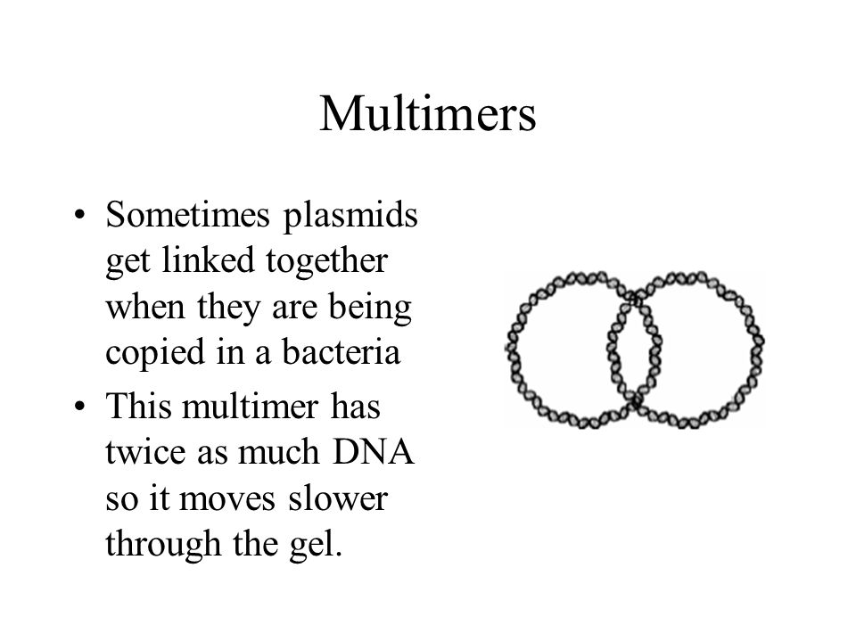 Multimers Sometimes plasmids get linked together when they are being copied in a bacteria.