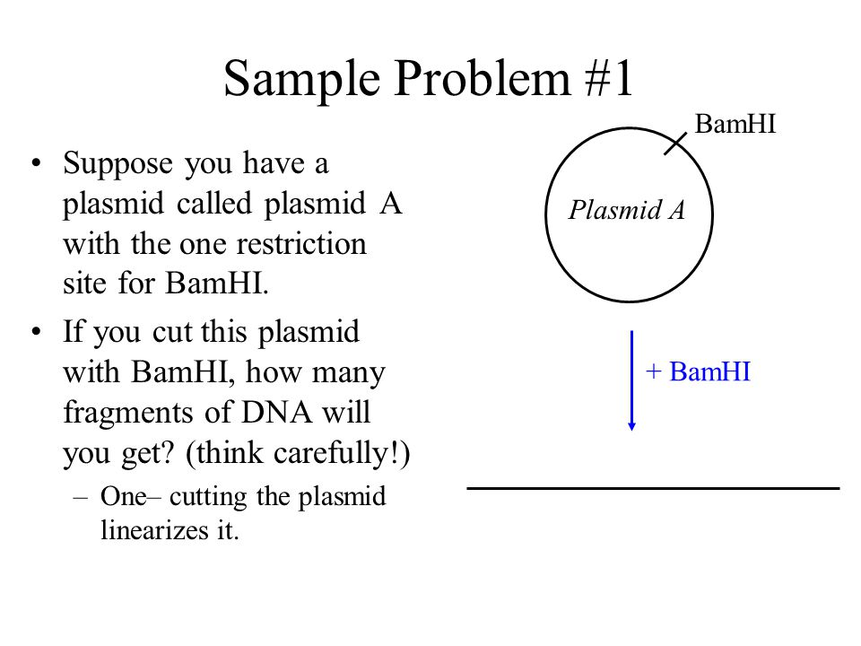 Sample Problem #1 BamHI. + BamHI. Suppose you have a plasmid called plasmid A with the one restriction site for BamHI.