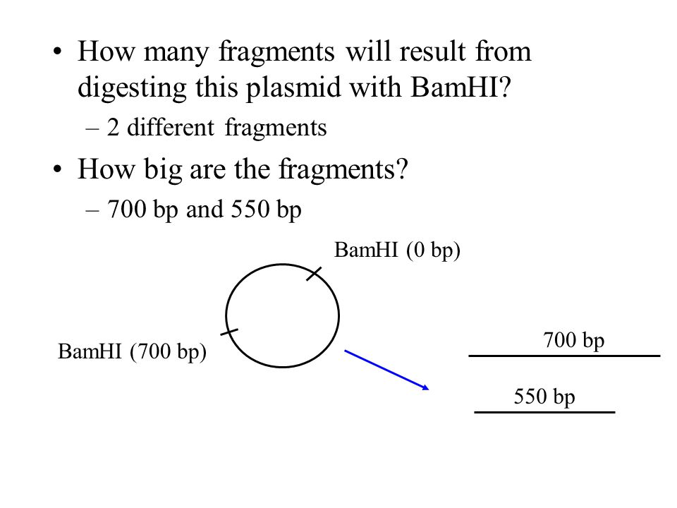 How many fragments will result from digesting this plasmid with BamHI
