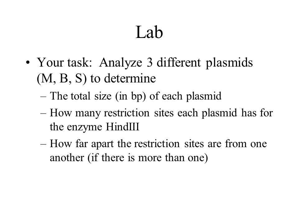 Lab Your task: Analyze 3 different plasmids (M, B, S) to determine