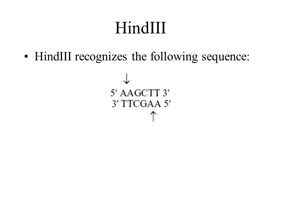 HindIII HindIII recognizes the following sequence: