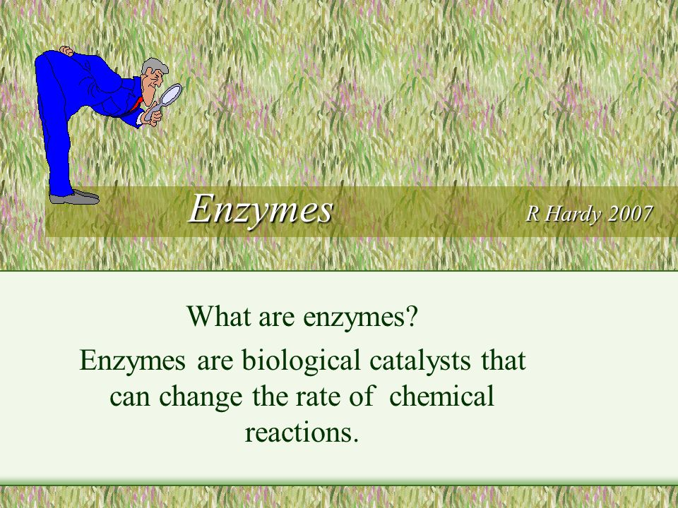 Enzymes What are enzymes