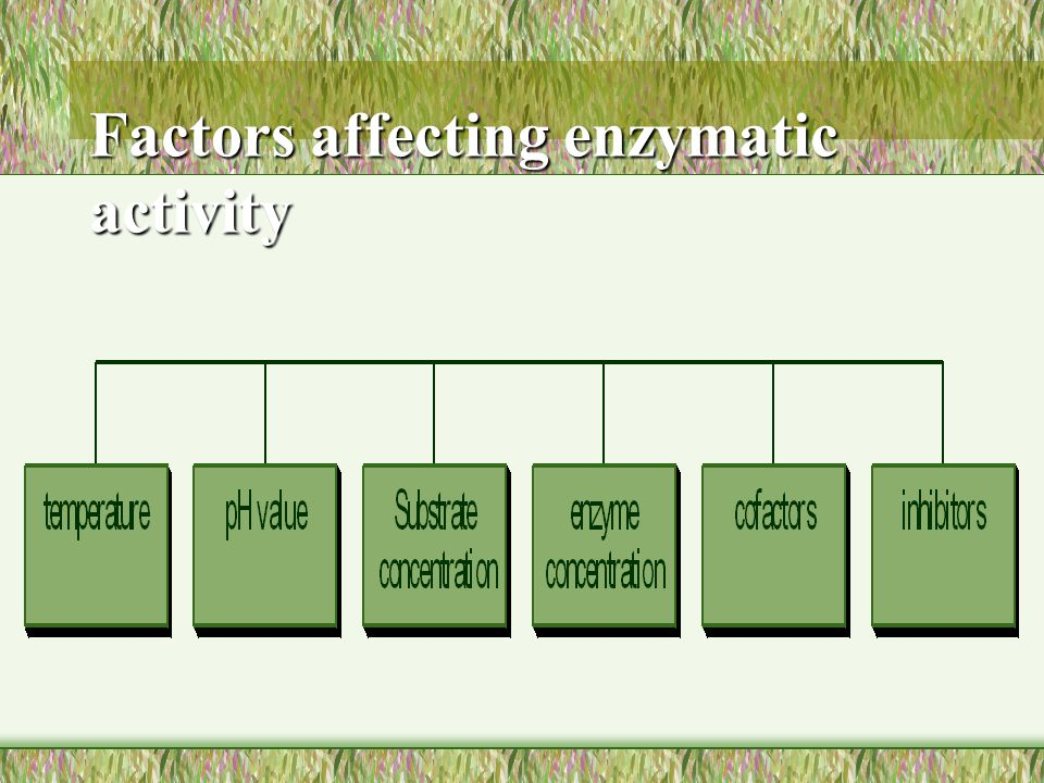 Factors affecting enzymatic activity
